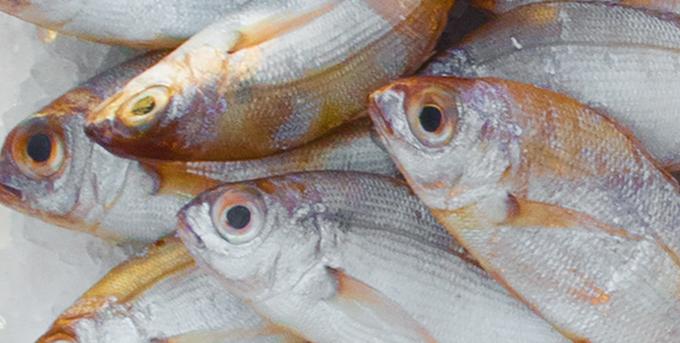 Рыбоперерабатывающая промышленность